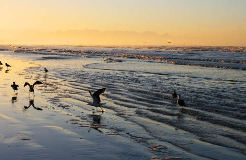 gull grouping
