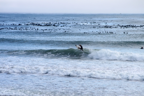 ripping surfers