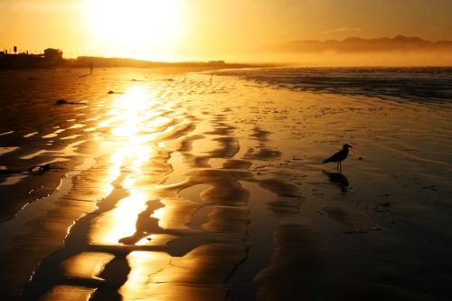 sea gull shadow