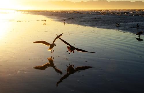 sea gulls surfers corner