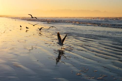 surfers corner gull