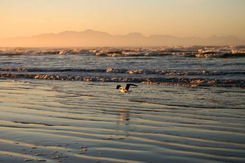 gull at surfers corner