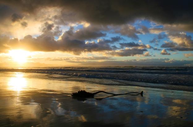 sunrise-kelp