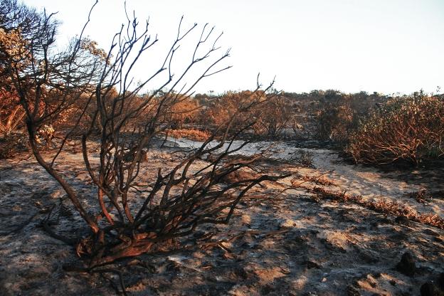 burnt-bush